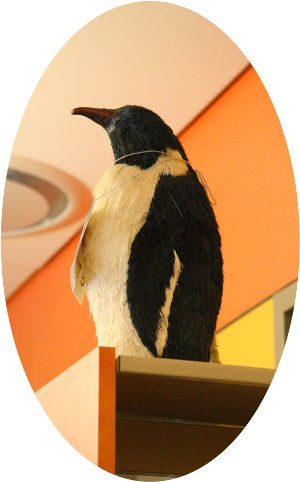 Our pet Penguin
